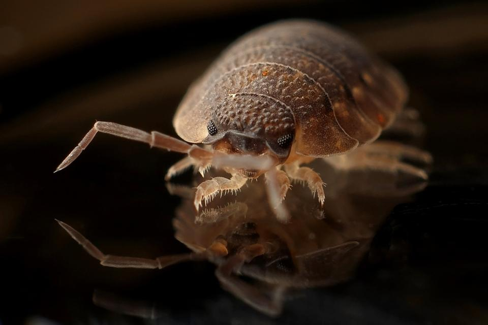 Can Bed Bugs Live Outside In Your Lawn Wikilawn